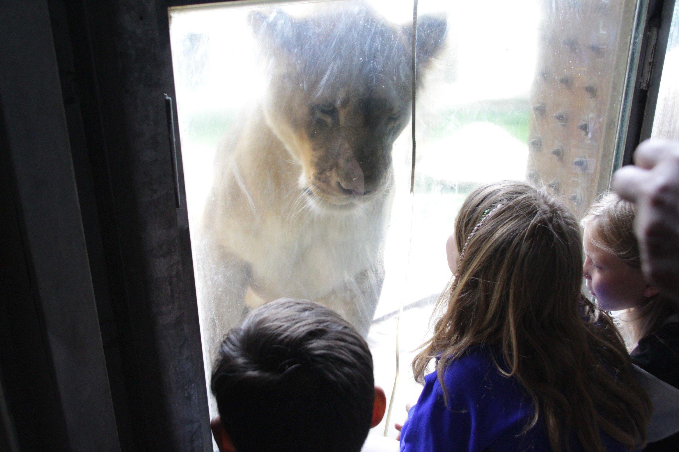 OsnaBRÜCKE - Familien Sommerfest Zoo