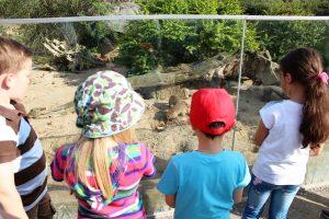 OsnaBRÜCKE - Zoo Sommerfest